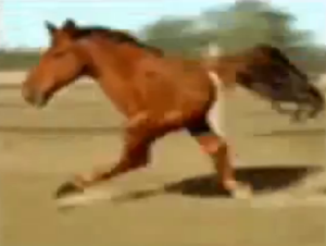 Funny Two Legged Horse